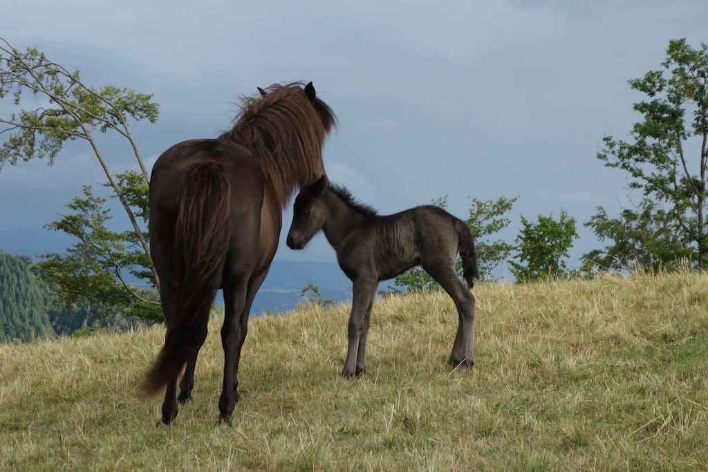 Mettlenhof  horse breeding and => Mettlenhof  Pferdezucht und => Mettlenhof(dot/Punkt)de