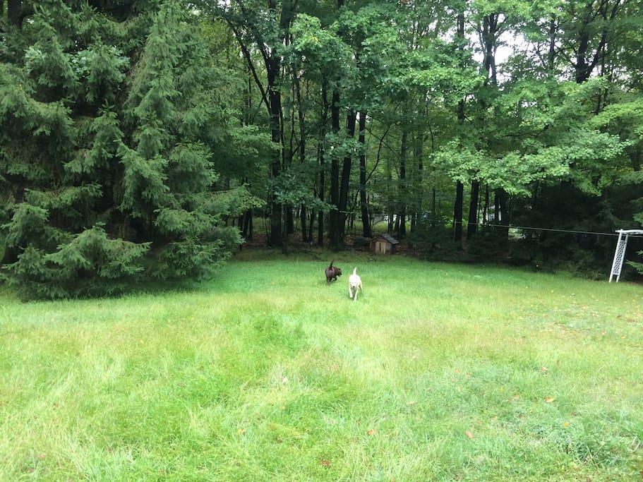 Dog friendly fence around yard.