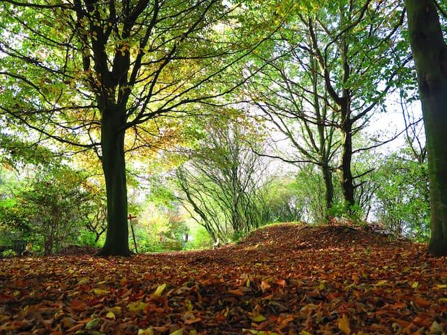 Wild & romantic camping spot under beech trees - Groningen - Tenda