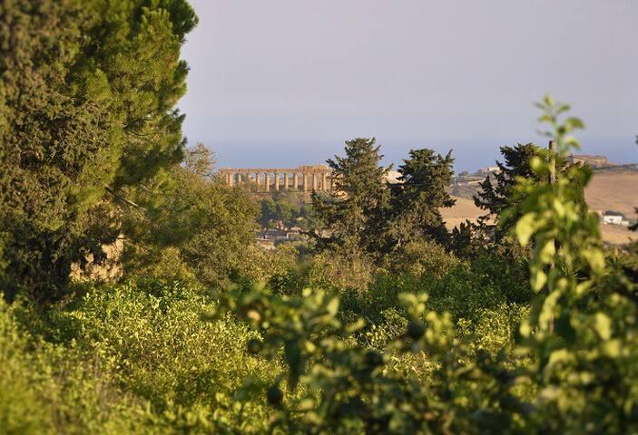 """Casa vacanze """"Gli Ulivi di Atena"""""""