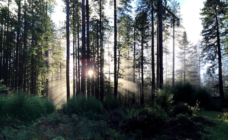 ~ Pacific Redwood Retreat ~