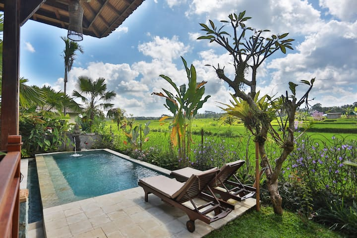 Bali Ubud Pool Villa, rice-paddy views!
