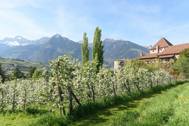 Ferienwohnung Schloss Planta, Meran