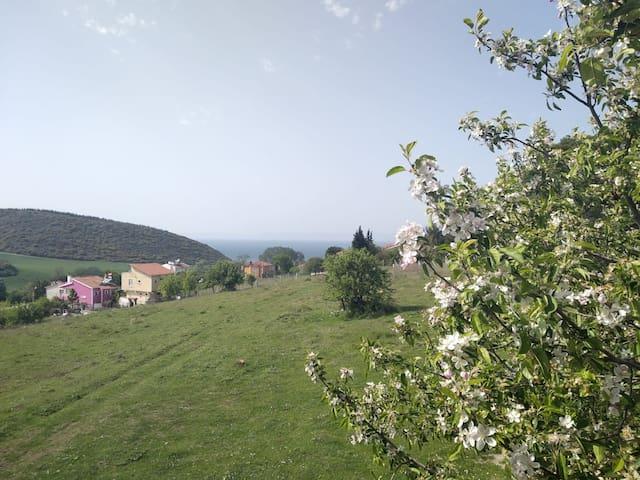 Guneyli Saroz Mahmutpasa Koyunda.