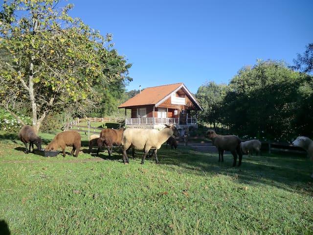 Chalé Morro do Sol - Gramado (casa de campo)