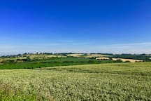 Summer view over the wheat fields