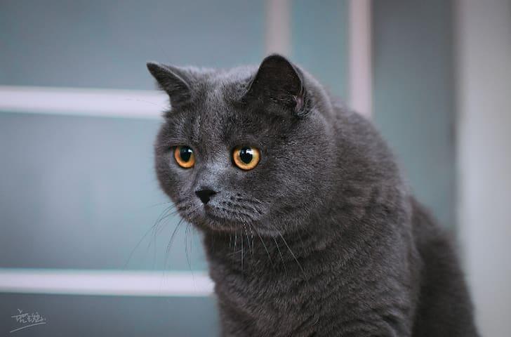 温柔的猫猫,名字是未来