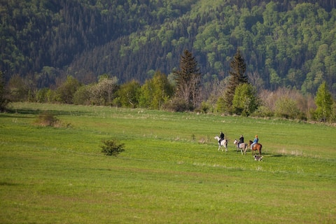 Nature & horses 4 mountain lovers!
