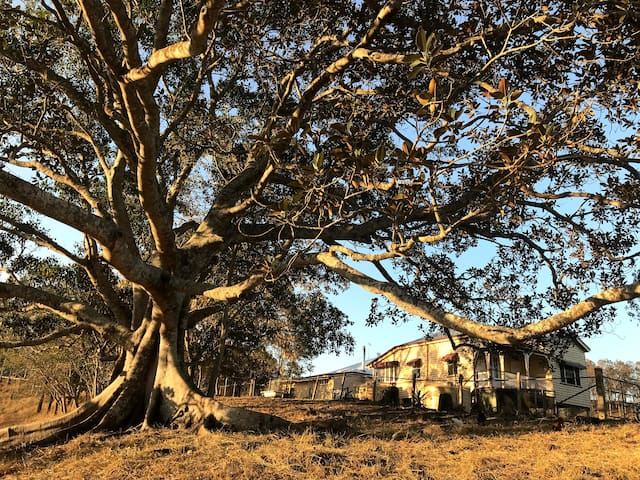 Laceys Creek Homestead