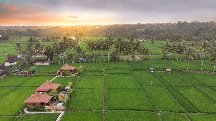 Private getaway with idyllic rice field view