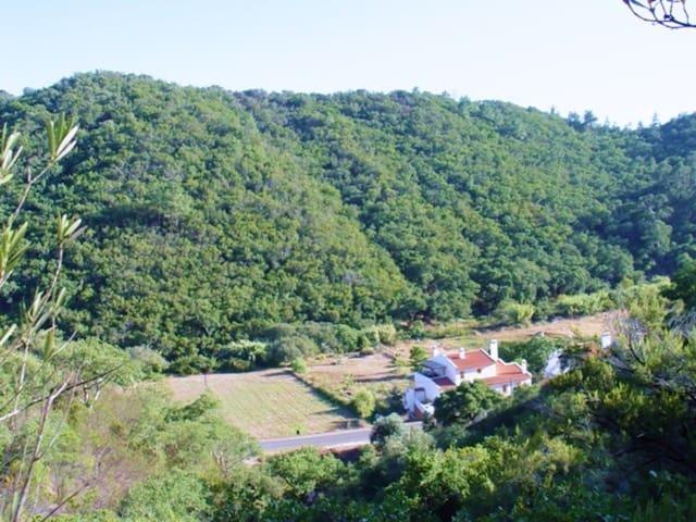 Natureza e charme no vale do Monte Verde - T2