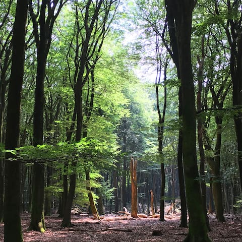Magical scenery in Vierhouten forest (Vierhouterbos) - directly adjacent to the Dennenholt Estate.