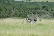 Kragga Kamma game reserve less than an hour away.