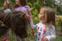 We have a petting zoo, where you can pet our farm animals. Perfect for the kids! (Contamos con un petting zoo, donde podrás acariciar a los animales. ¡Perfecto para los niños!)