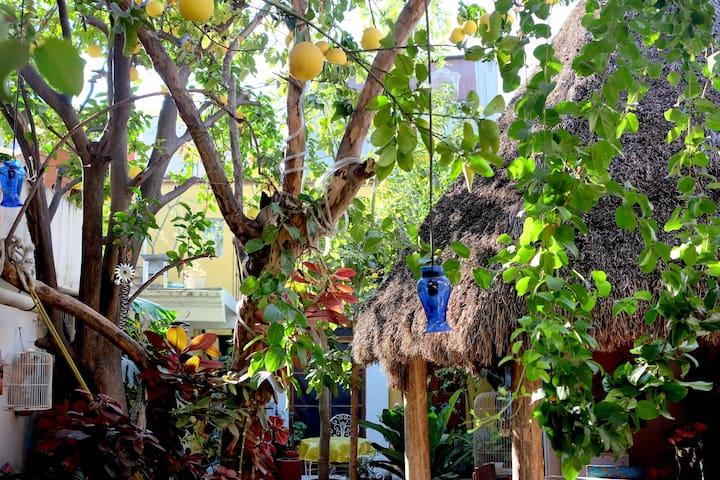 Casa Girón B&B Oaxaca - โออาซากา - ที่พักพร้อมอาหารเช้า