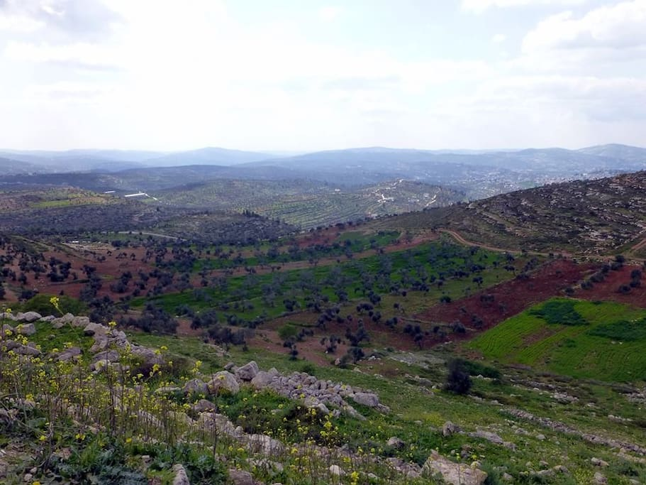Landscape around the place