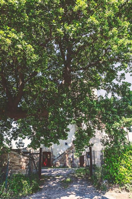La torre immersa nella chioma della quercia secolare