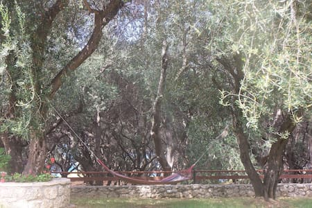 Relax surrounded by olive groves - Paramonas