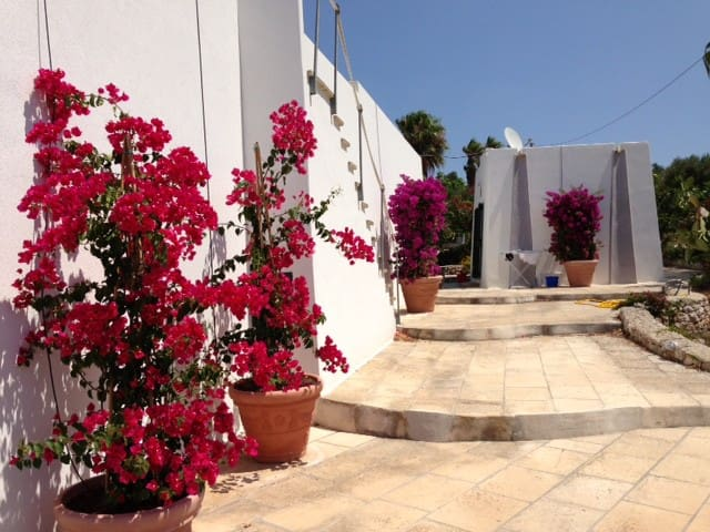 Beautiful Villa between olive trees and the sea - Salve - House