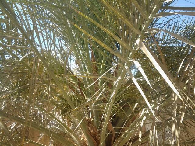 Casa Dulce, El Quseir, Red Sea - The Siwa Flat