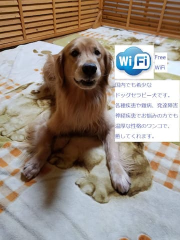 Lymph este near Nagoya dome beauty private wifi 5P