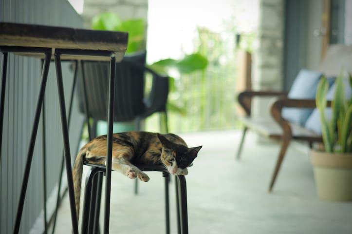 Stylish Room in Coffee Garden #3