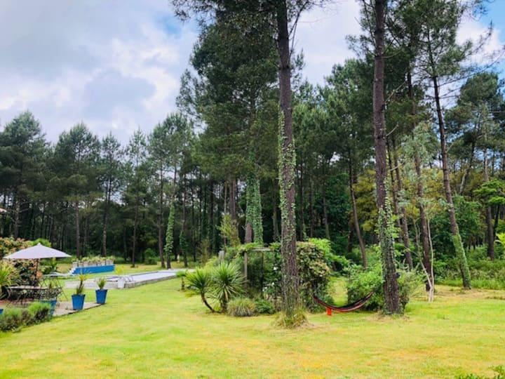 Un coin perdu dans la forêt ( La bleue)