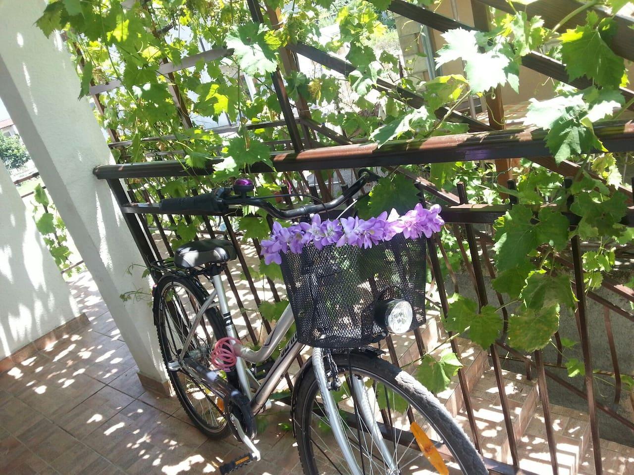 Balcony in grapes