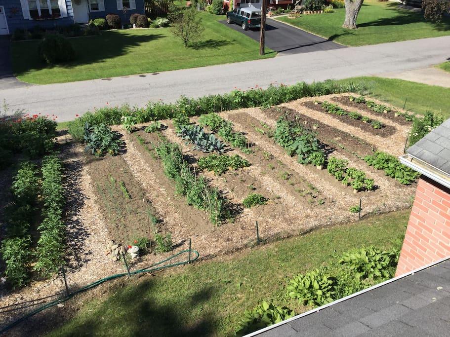 Large front yard garden.