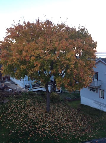 Our tree in the autumn