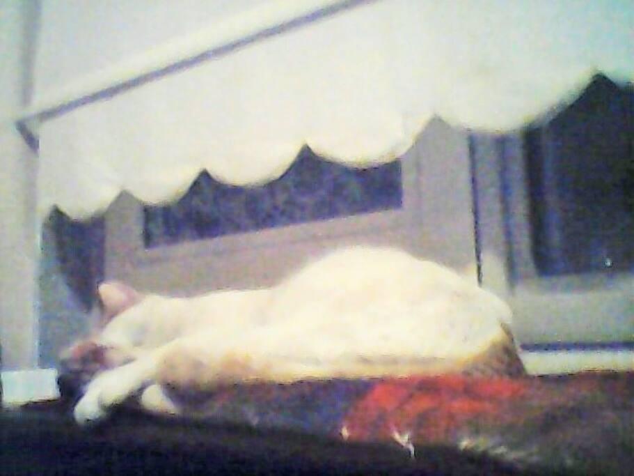 Katze in der Kuche  auf einen sicheren platz