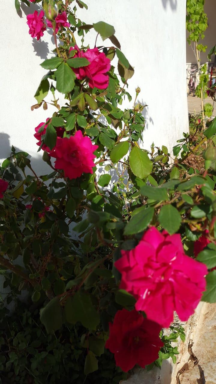I Giardini di Lanzo