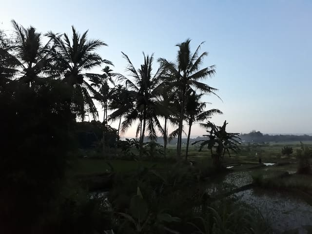 View on the rice fields