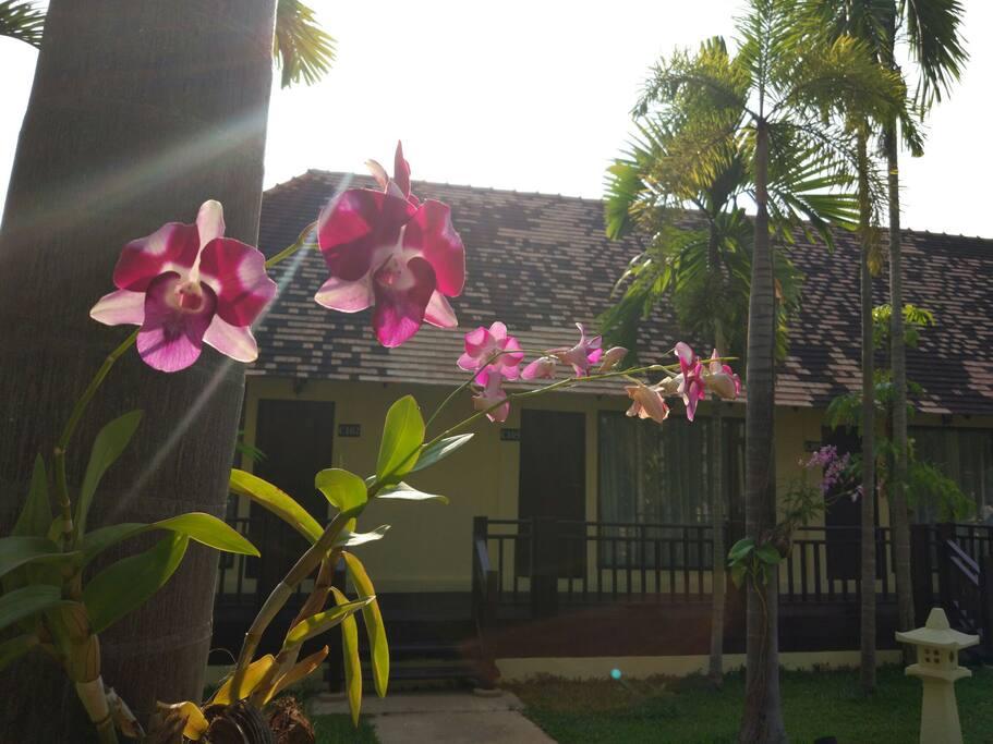 出租的房子