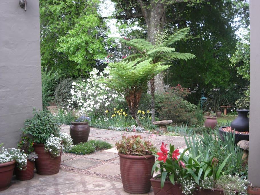 View of garden from front verandah