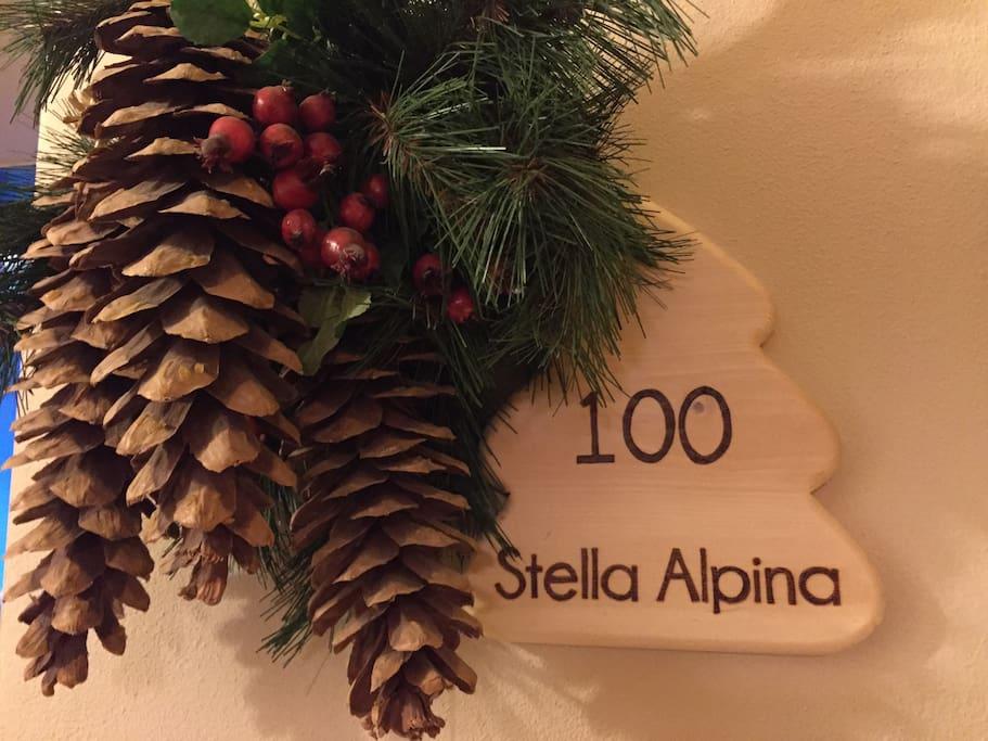 Stella Alpina Trilocale