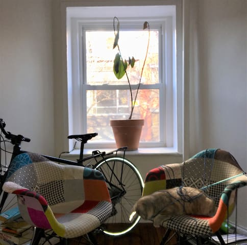 1 bedroom Greenpoint, Brooklyn