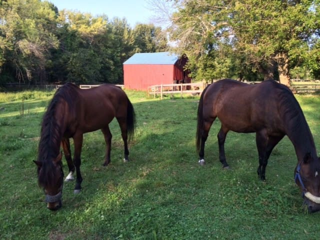 My two rescue horses with 1850 Quaker built barn in background.