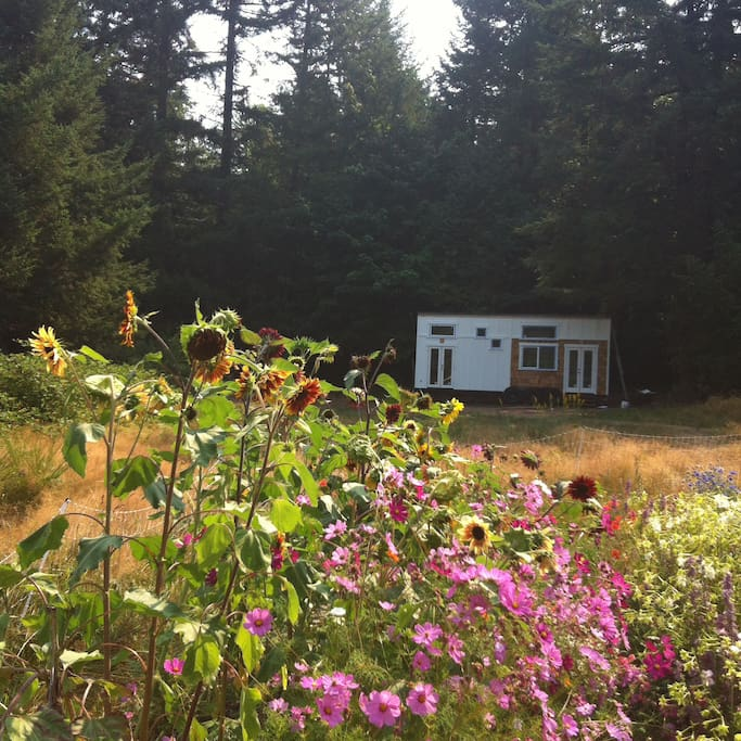 Tiny house tucked on the edge of the forest and meadow. Deck coming soon!