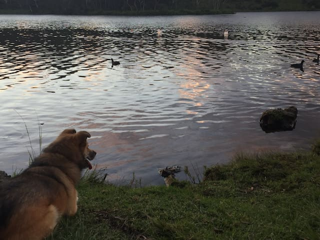 Gorgeous Wentworth Falls lake is just 2.5km from Werona and it's dog friendly too!  Take a beautiful stroll around the lake, have a BBQ or let the kids play on the equipment.