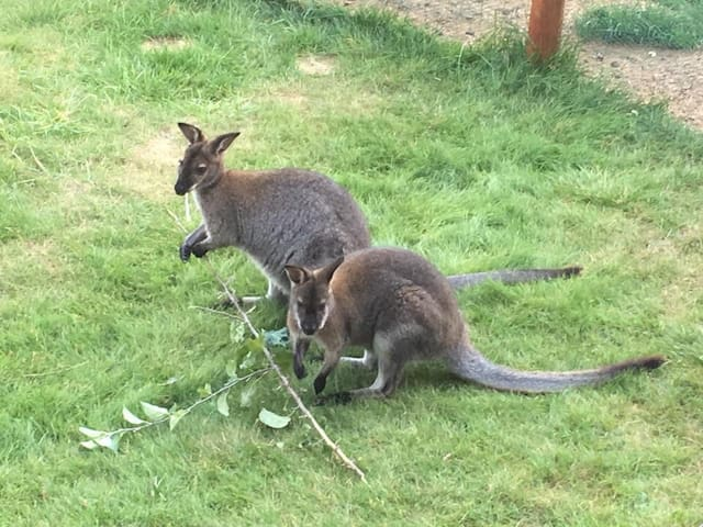 Double room and kangaroos in Berlin