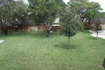 green surroundings