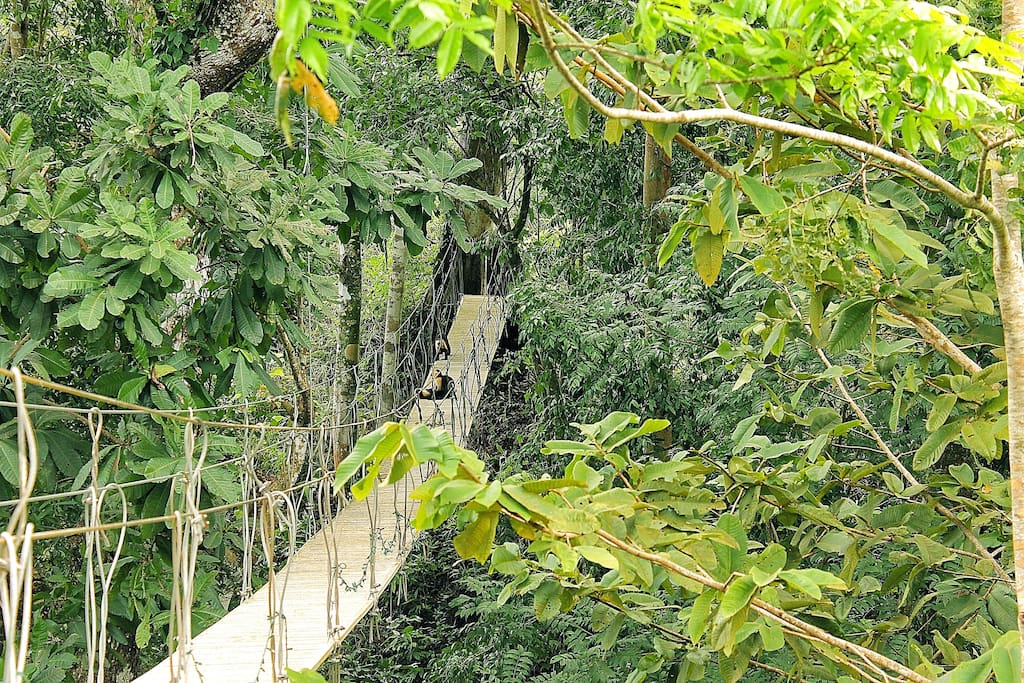 Canopy bridge where the monkeys play (on the property)