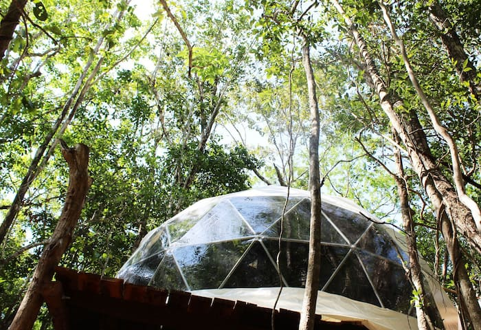 Treehouse dome with big bay window, your own intimate space far away from other guest spaces.