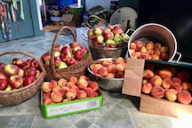 Wonderful year for peaches and apples-I did lots of canning