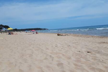 Playa, Bosque, Calma  -   Nº Lic. :HUTT-050328-26