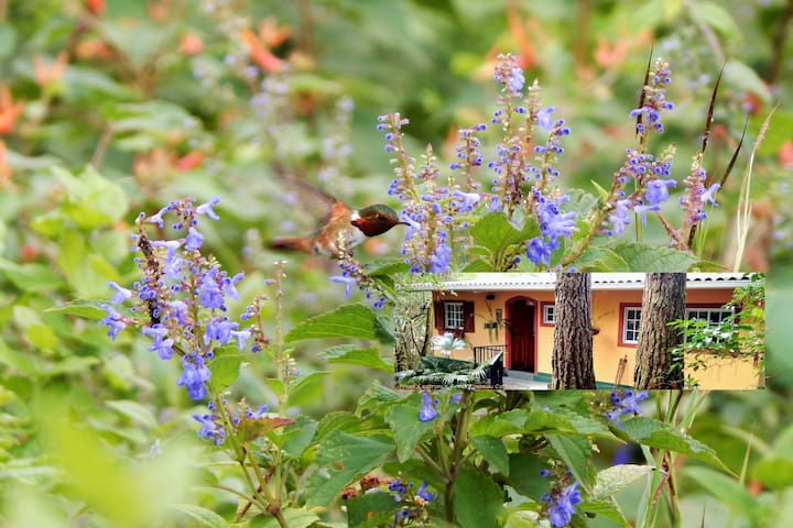 The Boquete nature Cottage  (long term stay 14d >)