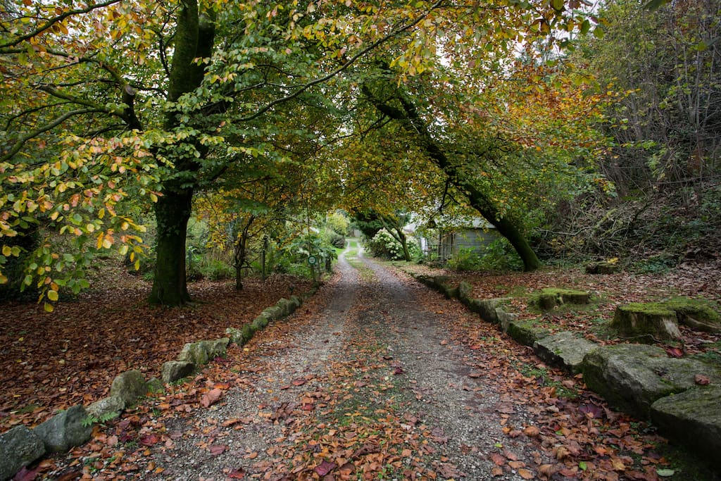 The drive to The Mill looking autumnal