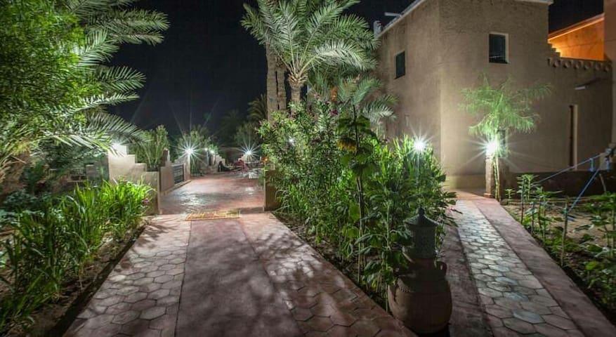 An oasis full of life on the edge of Sahara