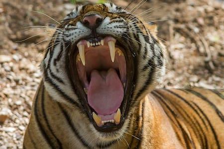 Fake Tiger Listing One - Jordan Valley - Lakás